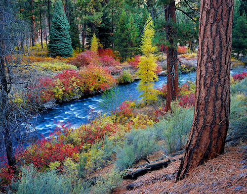 Photograph of Shevlin Park in Autumn.