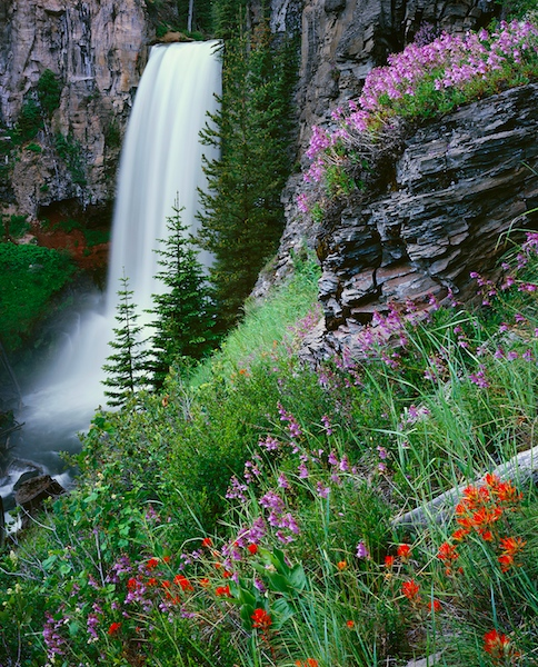 Bend Oregon's Tumalo Falls with summer wildflowers